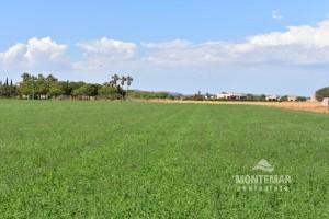 Finca-Grundstück bei Sa Rapita