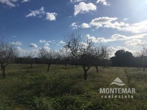 Finca-Neubauprojekt in Calonge mit Meerblick
