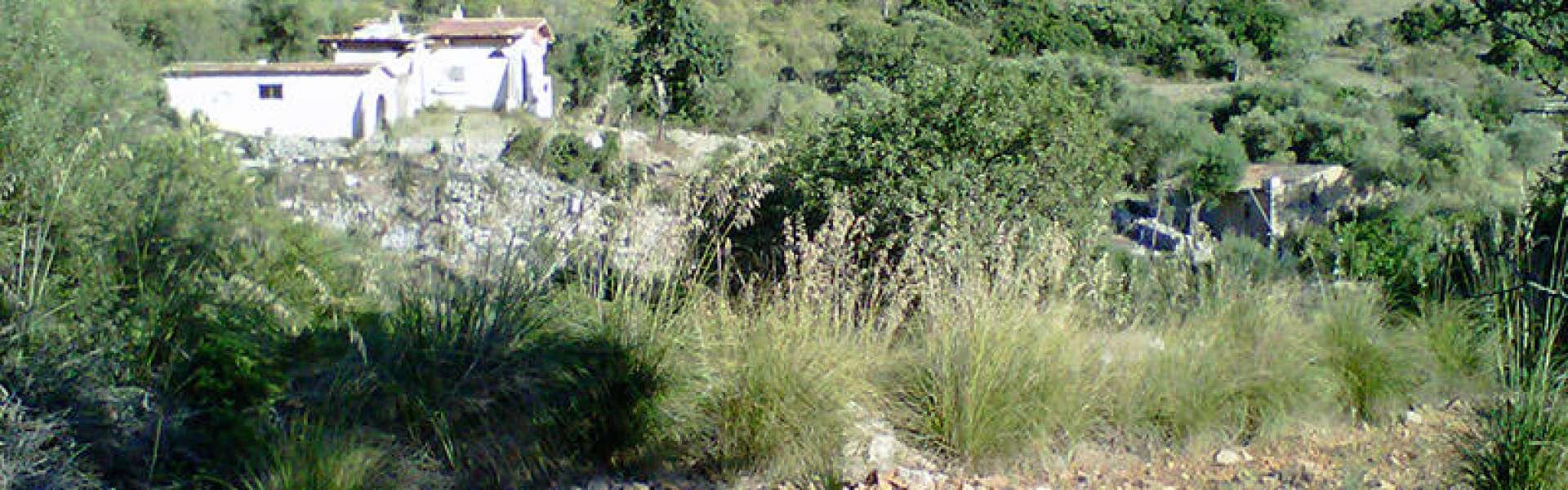 Baugrundstück mit Fincaruine nahe Manacor