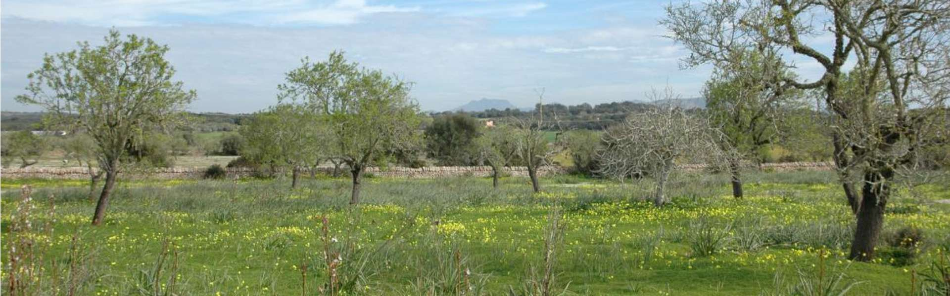 Schönes Baugrundstück nahe Ses Salines