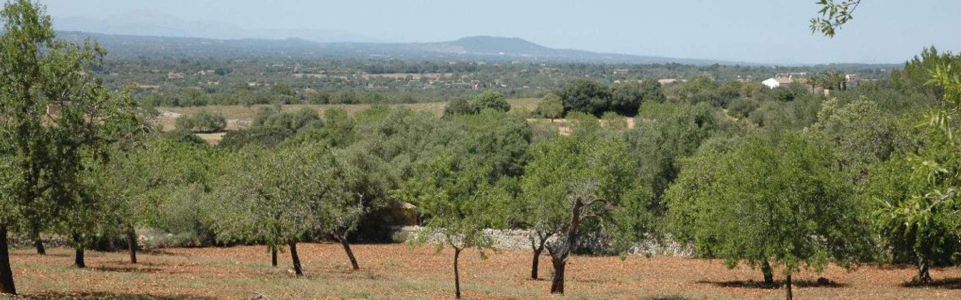 Realisiertes Projekt mit traumhaftem Panorama-Weitblick in Santanyi