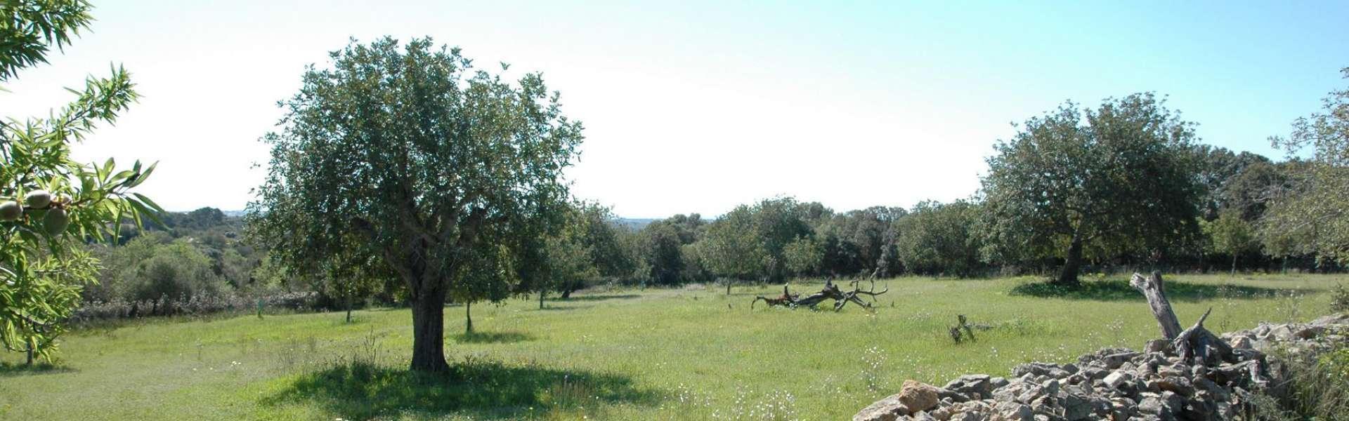 Meerblickbaugrundstück bei Alqueria Blanca