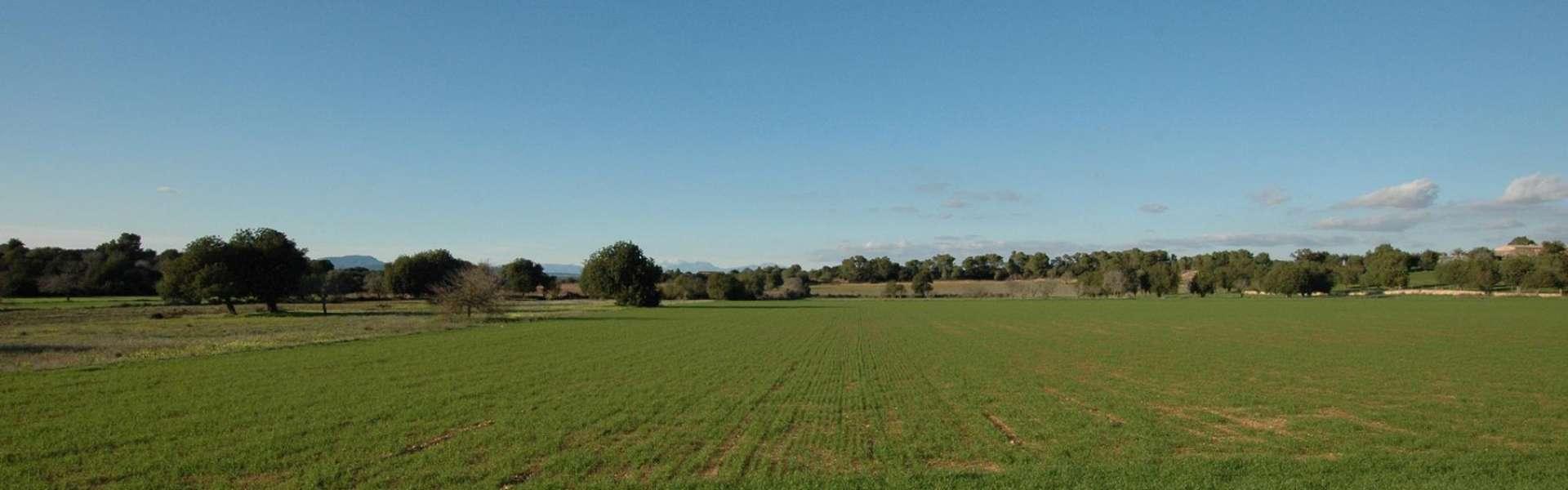 24.000 qm großes Finca-Baugrundstück in Cas Concos