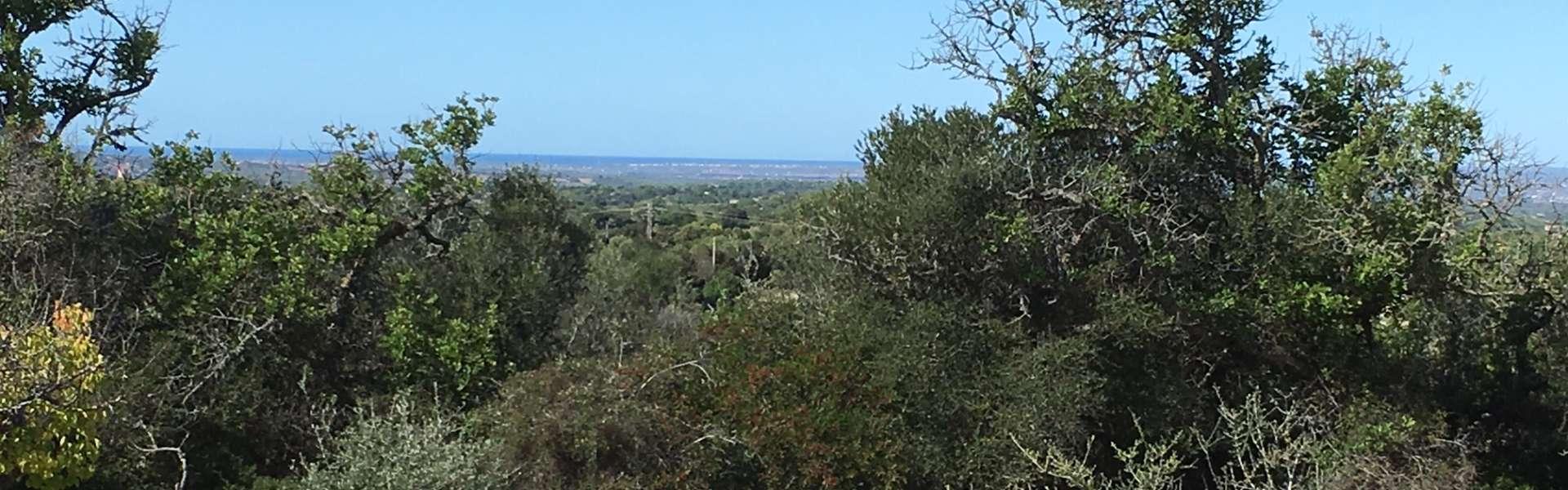 Baugrundstück mit traumhaften Panorama-Meerblick in Es Carritxo