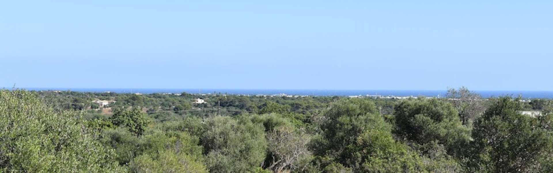 Meerblick-Grundstück mit Potenzial in Alqueria Blanca
