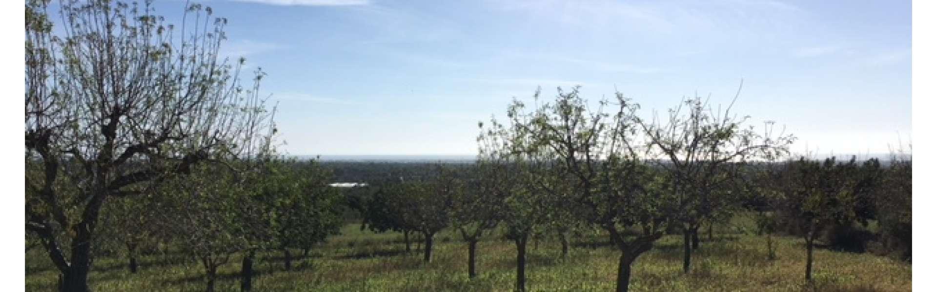 Alqueria Blanca - Baugrundstück mit Traumblick
