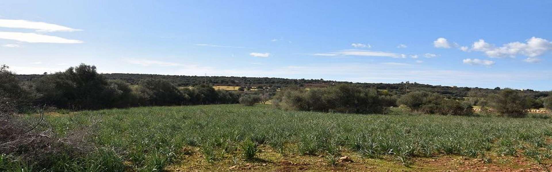 Campos - Finca Ruine mit idyllisch großzügigem Grundstück