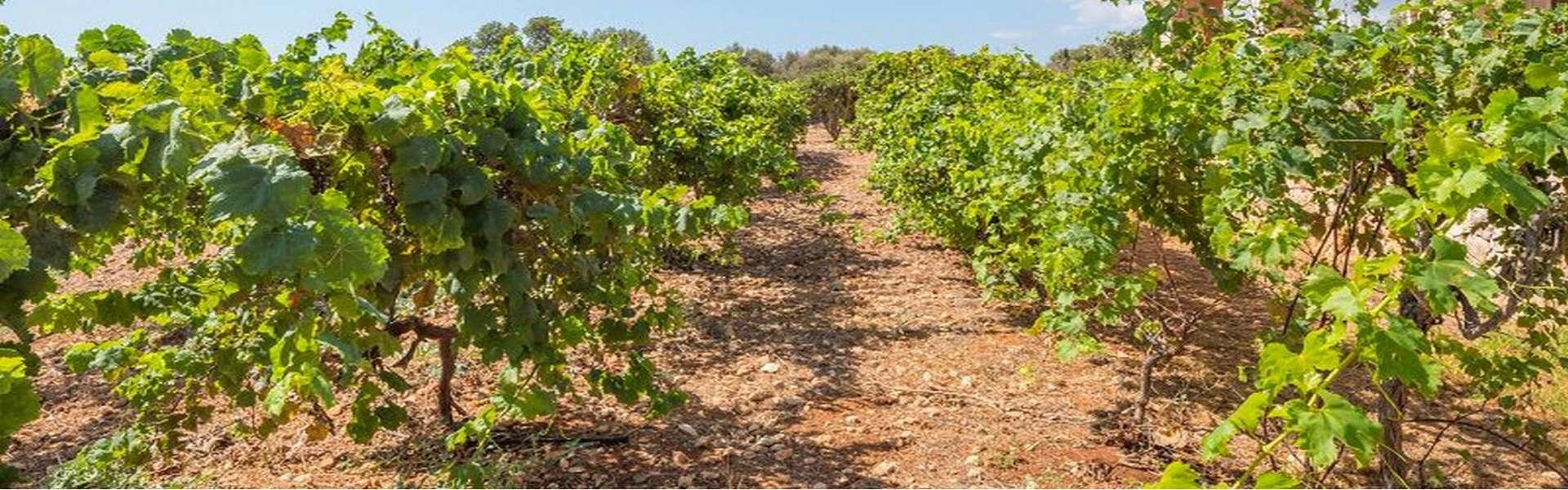 Alqueria Blanca - Wunderschöne Finca mit Meerblick zum Verkauf
