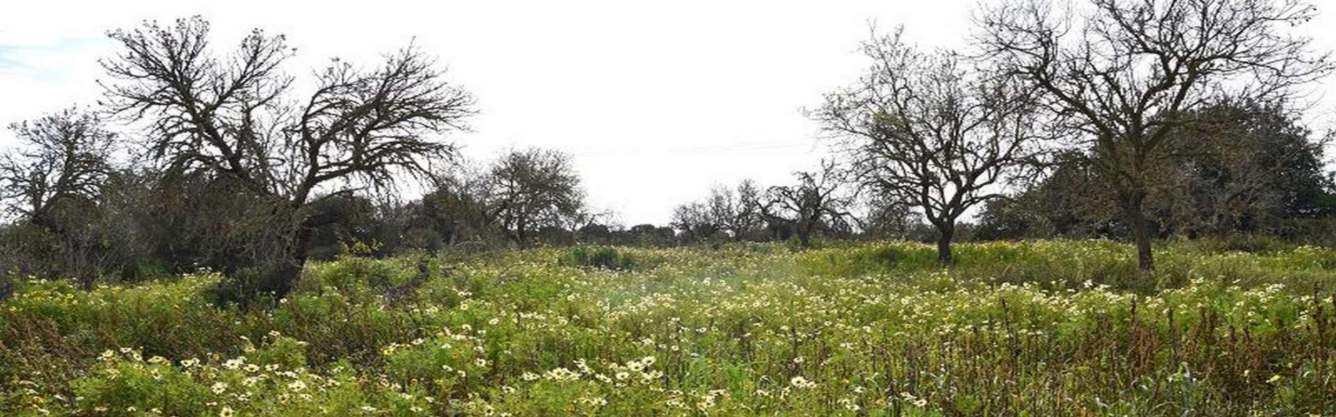 Grundstück mit Bauprojekt in Es Llombards zum Verkauf