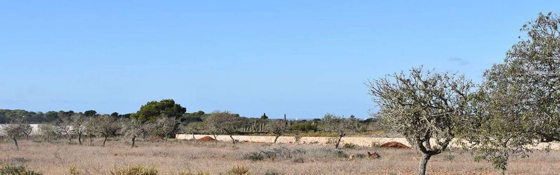 Baugrundstück mit genehmigtem Projekt bei Cap de Ses Salines