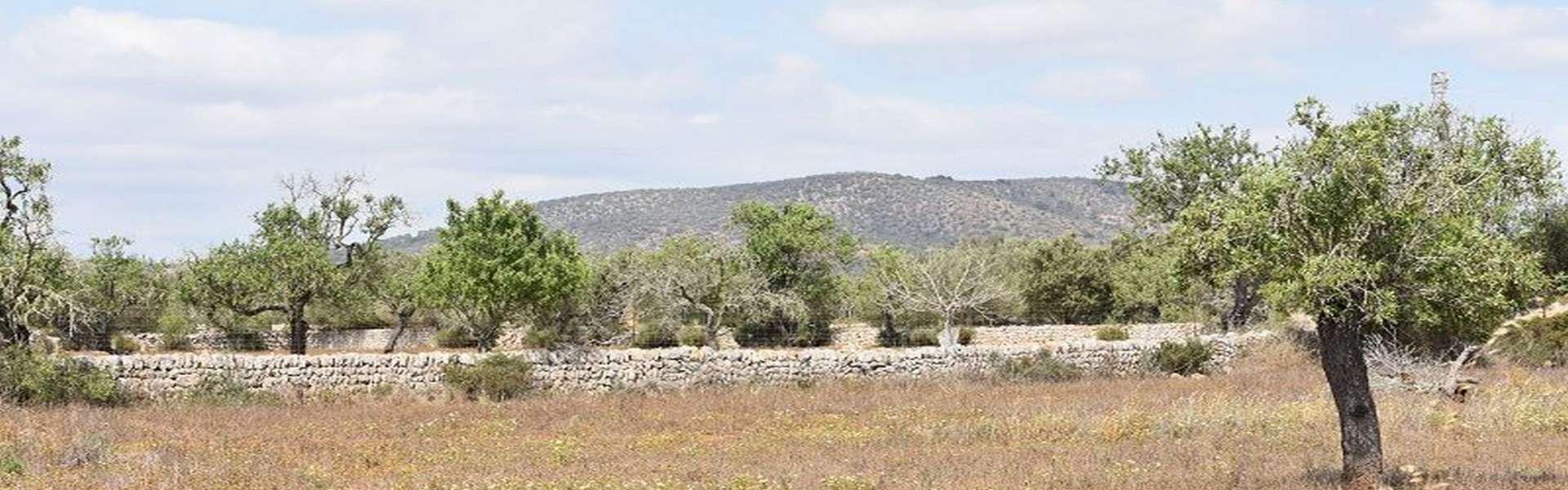 Santanyí - Grundstück mit Bauprojekt in schöner Lage